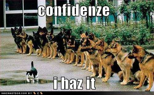 funny cat confidence